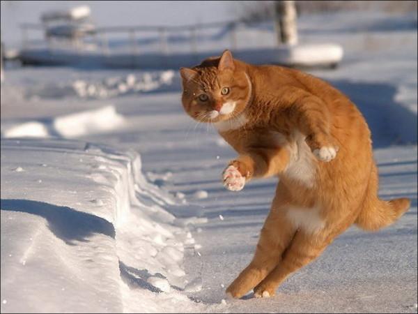 """Résultat de recherche d'images pour """"image chat neige"""""""